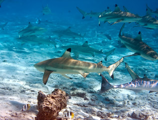 Sharks over a coral reef at ocean..