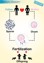Human Fertilization Diagram(Man produce sperm,Woman produce ovum