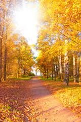 Photo sur Aluminium Automne Wallpaper Sunshine Foliage Beams