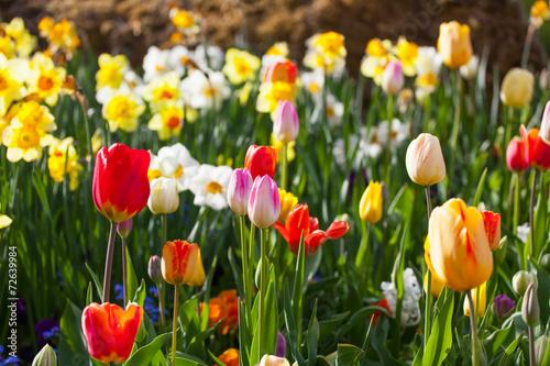 Spring time bunte blumenwiese im fr hling mit tulpen for Bilder fruhling