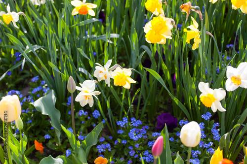 spring time bunte blumenwiese im fr hling mit tulpen und narz stockfotos und lizenzfreie. Black Bedroom Furniture Sets. Home Design Ideas