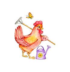 Cute red hen