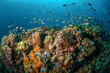 Various reef fishes, Gili Lombok Nusa Tenggara Barat underwater