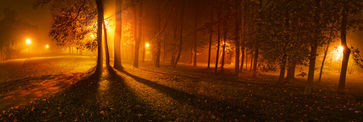 Papiers peints Marron Panoramic view of trees on a foggy night in park