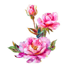 Roses isolated on white, oil painting