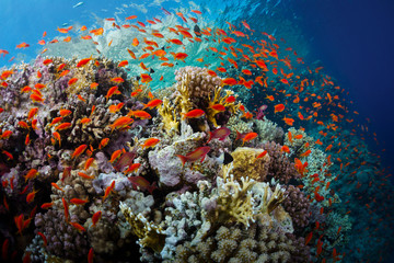Tuinposter Onder water Red Sea