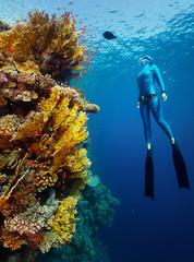 Photo Blinds Diving Freediver