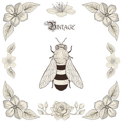 bee drawing vintage engraving style