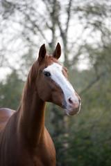 Cavallo al prato