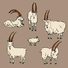 New year 2015. Set of goats. Hand drawn illustration.
