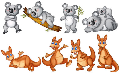 Koalas and kangaroos