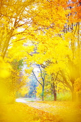 autumn landscape with fallen leaves and yellowed