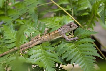 lizard on fern