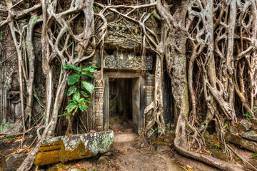 Fotomurales - Ancient stone door and tree roots, Ta Prohm temple, Angkor