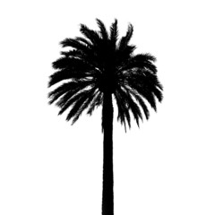 Black palm tree silhouette isolated on white