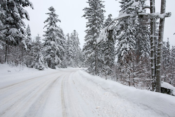 winter road in forest after snowfall