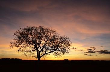 Pôr-do-sol no Cerrado goiano