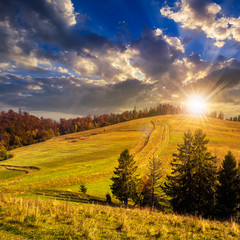 trees on autumn meadow in mountains at sunset