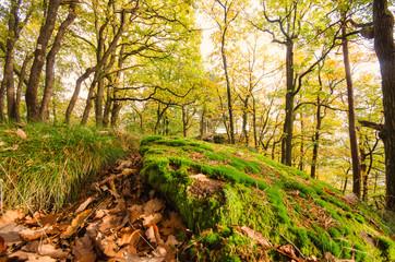 Einladung zum Träumen: Pfälzer Wald im Herbst :)