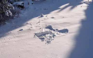 Snow angel in deep snow on a forest clearing