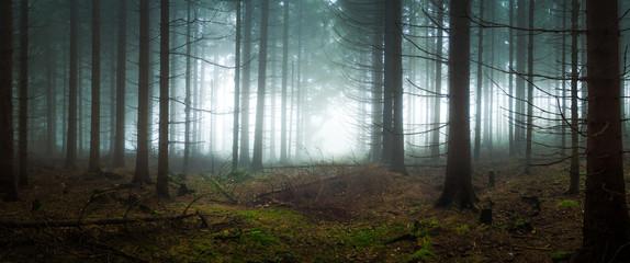 Fototapeten Wald Spooky forest in the fog
