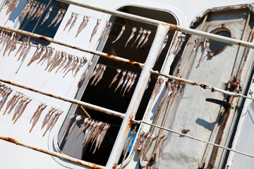 Small salted sprat fish drying on white fishing boat