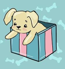 cute dog sits in a box.