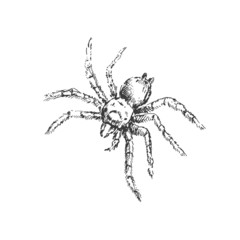 Sketch spider. Vector illustration.