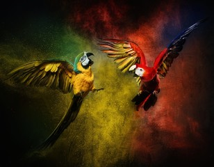 Fototapete - Two parrots fighting against colourful powder explosion