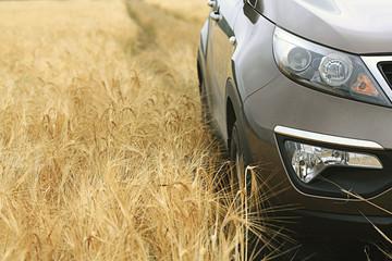 car in a wheat field summer SUV