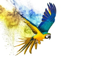 Wall Mural - Colourful flying parrot isolated on white
