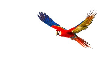 Colourful flying parrot isolated on white Wall mural