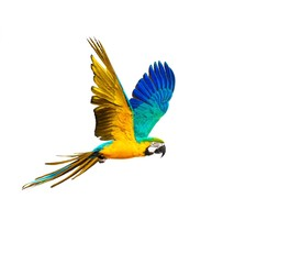 Poster Perroquets Colourful flying parrot isolated on white