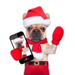 christmas selfie dog