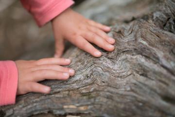 老木を触る子供の手