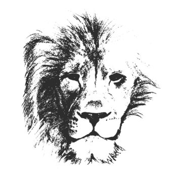 lion head. hand drawn. vector illustration