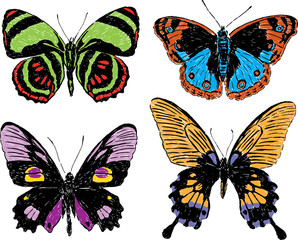 drawn butterflies