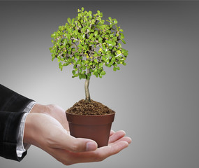 Human hands holding tree