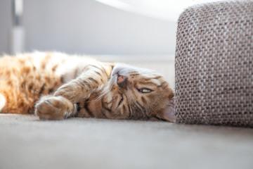 Bilder und videos suchen katzenpfote for Couch vor heizung