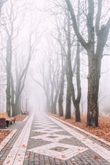foggy morning in city park