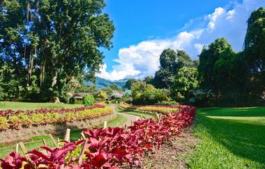 Royal Botanical Garden, Peradeniya Sri Lanka