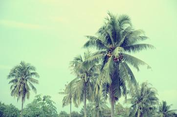 palm vintage