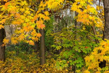 autumn park in foliage