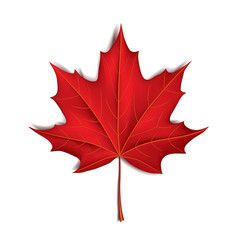 Red maple leaf isolated on white vector