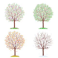 Seasons. Trees in spring, autumn, summer and winter.