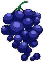 Grape illustration