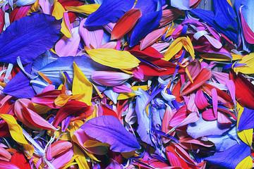 Zelfklevend Fotobehang Paradijsvogel The natural texture of multicolored flower petals, colorful