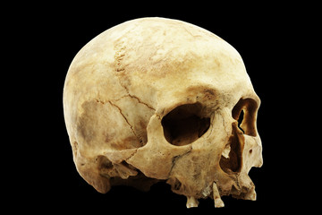 Genuine human skull isolated on black background