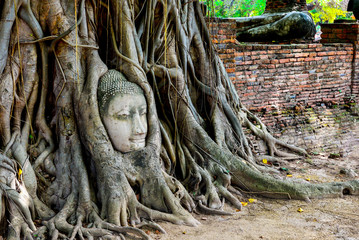 The head of Buddha in tree