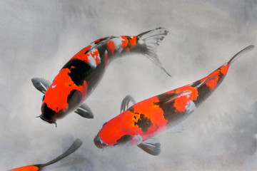 Calico Koi Fish Watercolor Illustration